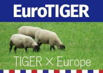 EuroTIGER(ユーロタイガー)