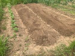 今年夏野菜を植えるのはココ!
