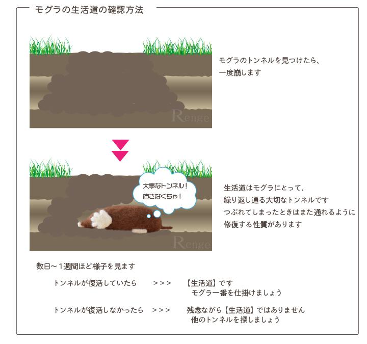 モグラの生活道の確認方法
